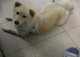 寻狗启示,狗狗于2月20日晚上遗失在东莞塘角生态园附近,请求大家多多留意帮忙!!!拜托,它是一只非常可爱的宠物狗狗,希望它早日回家,不要变成流浪狗。