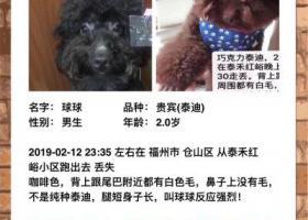寻狗启示,万元寻狗,2月12日晚上23:35在仓山区泰禾红峪走丢,它是一只非常可爱的宠物狗狗,希望它早日回家,不要变成流浪狗。