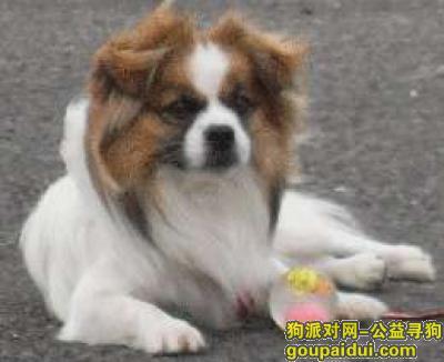 吉林寻狗,永吉县城门附近出现过,它是一只非常可爱的宠物狗狗,希望它早日回家,不要变成流浪狗。