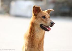 寻狗启示,杭大路世贸黄龙看到至少走失6天的狗狗,它是一只非常可爱的宠物狗狗,希望它早日回家,不要变成流浪狗。