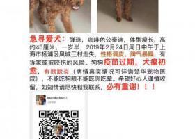 寻狗启示,上海杨浦区凤城三村酬谢两千元寻爱犬泰迪,它是一只非常可爱的宠物狗狗,希望它早日回家,不要变成流浪狗。