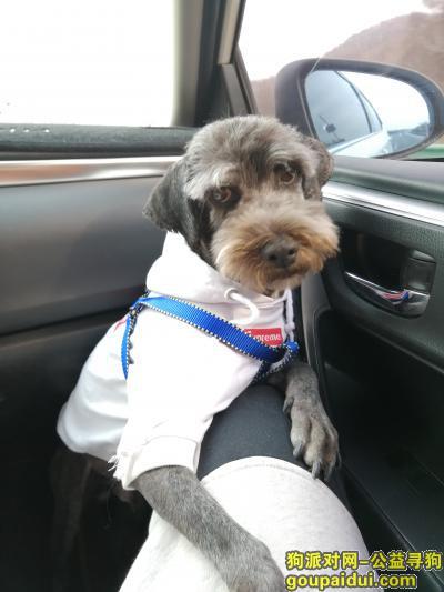 ,2月27日早上8:30左右在第一人民医院门前小广场附近丢失一只黑灰色的雪纳瑞串,它是一只非常可爱的宠物狗狗,希望它早日回家,不要变成流浪狗。