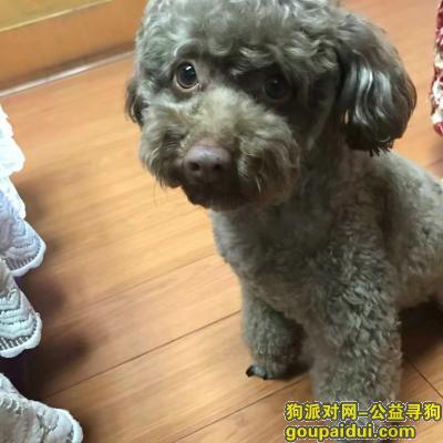 邵阳寻狗,重金寻狗启示 主人痛苦万分。,它是一只非常可爱的宠物狗狗,希望它早日回家,不要变成流浪狗。