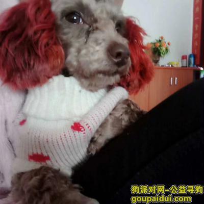 ,寻找一条泰迪狗 望好心人帮忙留意,它是一只非常可爱的宠物狗狗,希望它早日回家,不要变成流浪狗。