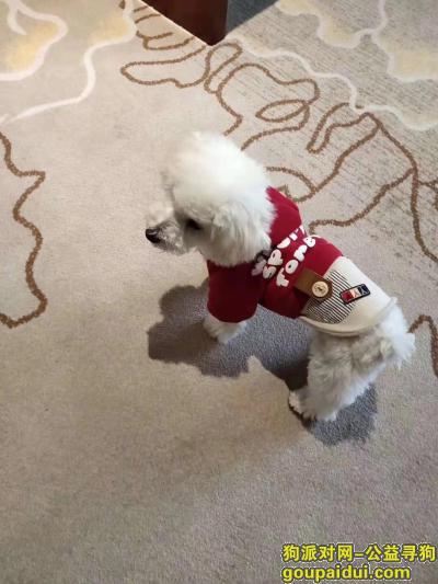 南充寻狗启示,寝食难安的想念我的小白,它是一只非常可爱的宠物狗狗,希望它早日回家,不要变成流浪狗。
