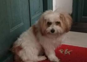 寻狗启示,招领一只流浪狗 朝晖路京都苑,它是一只非常可爱的宠物狗狗,希望它早日回家,不要变成流浪狗。