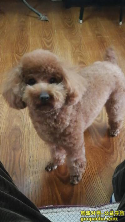 牡丹江寻狗启示,寻找3月6日在曙光新城走失泰迪公犬,它是一只非常可爱的宠物狗狗,希望它早日回家,不要变成流浪狗。