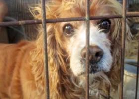 寻狗启示,寻狗【8个月大的哈士奇】必有重谢,求好心人帮忙多注意下,它是一只非常可爱的宠物狗狗,希望它早日回家,不要变成流浪狗。