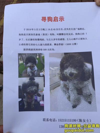 莆田寻狗,悬赏5000元寻找丢失的深灰色泰迪(贵宾),它是一只非常可爱的宠物狗狗,希望它早日回家,不要变成流浪狗。