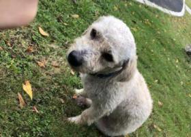 寻狗启示,深圳福田中心公园捡到一只戴蓝色脖圈的狗狗,它是一只非常可爱的宠物狗狗,希望它早日回家,不要变成流浪狗。