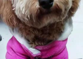 寻狗启示,寻狗启示江阴市阳光汽配城,它是一只非常可爱的宠物狗狗,希望它早日回家,不要变成流浪狗。