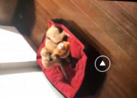 寻狗启示,南京浦口寻泰迪看到的请联系我必有重谢,它是一只非常可爱的宠物狗狗,希望它早日回家,不要变成流浪狗。