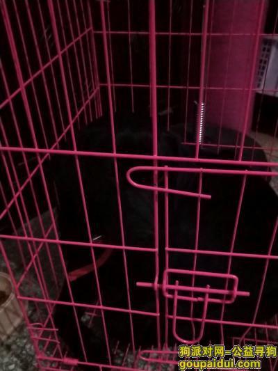 郑州找狗主人,急寻狗主人领走丢失的拉布拉多,它是一只非常可爱的宠物狗狗,希望它早日回家,不要变成流浪狗。