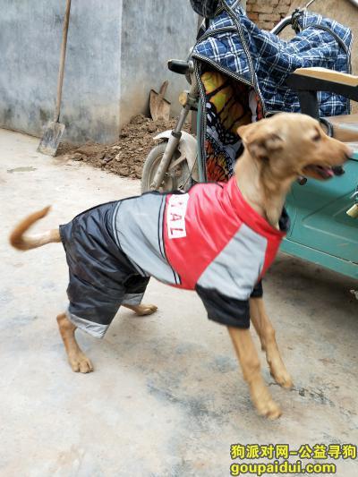 菏泽寻狗启示,你的狗狗在这里等你把它领回家,它是一只非常可爱的宠物狗狗,希望它早日回家,不要变成流浪狗。