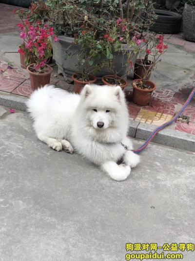 漳州找狗,漳州市颜厝下宫附近被骑蓝色摩托车的人牵走,人大概30 40岁的样子。,它是一只非常可爱的宠物狗狗,希望它早日回家,不要变成流浪狗。