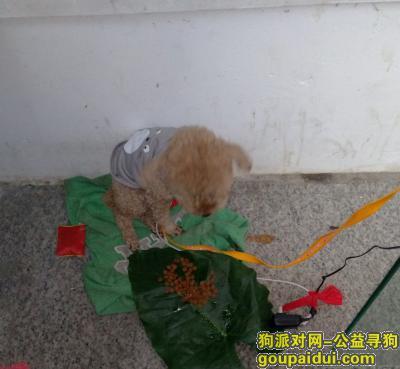 深圳找狗主人,为狗狗找主人,狗狗现在不吃东西,它是一只非常可爱的宠物狗狗,希望它早日回家,不要变成流浪狗。