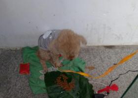 寻狗启示,为狗狗找主人,狗狗现在不吃东西,它是一只非常可爱的宠物狗狗,希望它早日回家,不要变成流浪狗。