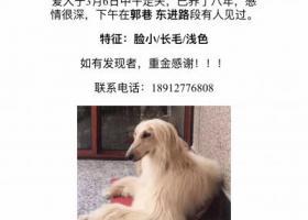 寻狗启示,郭巷/东进路/尹山桥附近,特征脸小/长毛/浅色!,它是一只非常可爱的宠物狗狗,希望它早日回家,不要变成流浪狗。