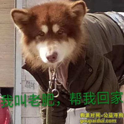 商丘找狗,患有皮肤病,肠胃不好,毛剃光了,它是一只非常可爱的宠物狗狗,希望它早日回家,不要变成流浪狗。