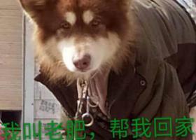寻狗启示,患有皮肤病,肠胃不好,毛剃光了,它是一只非常可爱的宠物狗狗,希望它早日回家,不要变成流浪狗。