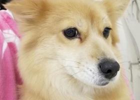 寻狗启示,寻狗启示希望有好心人捡到小狗,它是一只非常可爱的宠物狗狗,希望它早日回家,不要变成流浪狗。