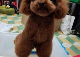寻狗启示,2000!不低于两千寻爱犬,它是一只非常可爱的宠物狗狗,希望它早日回家,不要变成流浪狗。