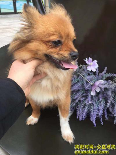 宜昌寻狗网,寻狗启示蝴蝶犬在小溪塔金狮宾馆附近走失,它是一只非常可爱的宠物狗狗,希望它早日回家,不要变成流浪狗。