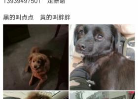 寻狗启示,重金寻找两只狗狗,希望好心人的帮助早点回家,它是一只非常可爱的宠物狗狗,希望它早日回家,不要变成流浪狗。