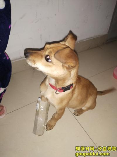 【苏州捡到狗】,昆山市建伟新世界大厦,它是一只非常可爱的宠物狗狗,希望它早日回家,不要变成流浪狗。