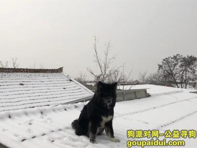 ,寻找一只很黑很黑的包子,它是一只非常可爱的宠物狗狗,希望它早日回家,不要变成流浪狗。