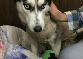 寻狗启示,求助!!!!家里的狗狗走丢了,它是一只非常可爱的宠物狗狗,希望它早日回家,不要变成流浪狗。