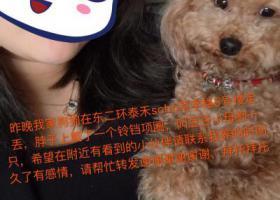 寻狗启示,福州寻狗启示东二环泰禾附近走丢,它是一只非常可爱的宠物狗狗,希望它早日回家,不要变成流浪狗。