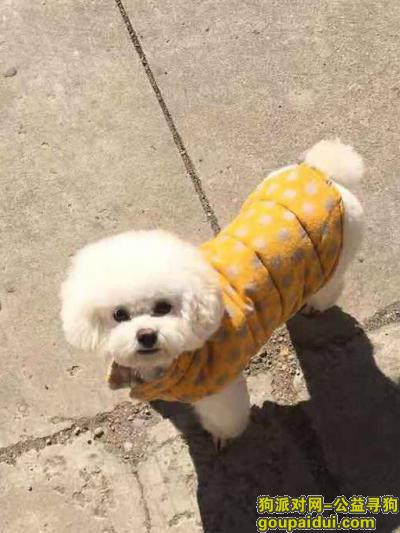 吉林找狗,吉林寻丢失爱犬泰迪小乖,它是一只非常可爱的宠物狗狗,希望它早日回家,不要变成流浪狗。