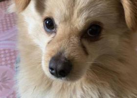 寻狗启示,3.21升州路来凤街附近走失狗狗,重金寻狗,它是一只非常可爱的宠物狗狗,希望它早日回家,不要变成流浪狗。
