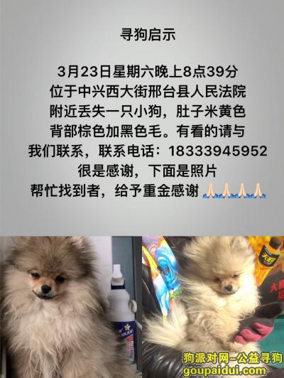,2019.3.23晚8:39走丢  博美,它是一只非常可爱的宠物狗狗,希望它早日回家,不要变成流浪狗。