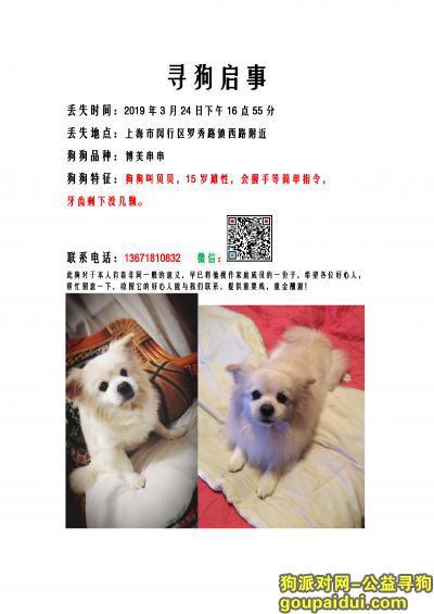寻狗启示,3.24上海闵行罗秀路寻狗启示,它是一只非常可爱的宠物狗狗,希望它早日回家,不要变成流浪狗。