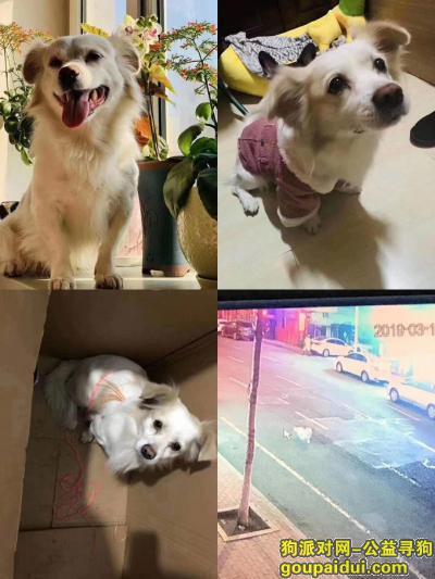 寻狗启示,有偿寻狗,送还酬谢2000,它是一只非常可爱的宠物狗狗,希望它早日回家,不要变成流浪狗。