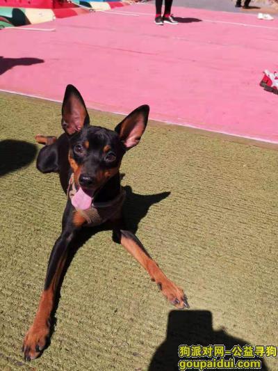 寻狗启示,帮忙找回我家渣渣爱狗,它是一只非常可爱的宠物狗狗,希望它早日回家,不要变成流浪狗。