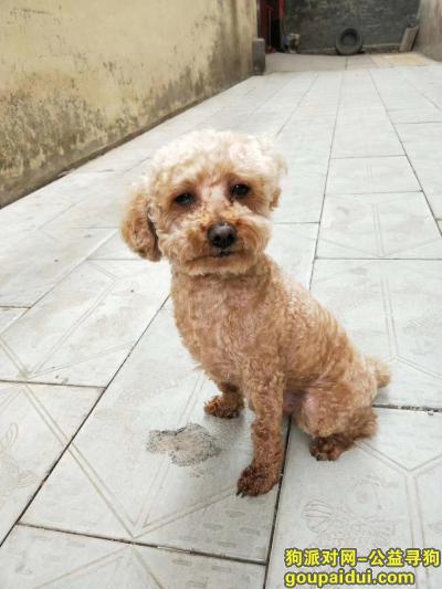 寻狗启示,寻找爱犬,金棕色6岁,它是一只非常可爱的宠物狗狗,希望它早日回家,不要变成流浪狗。