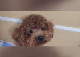 寻狗启示,3月21日我在厦门穆厝丢了小狗  名字叫yuki,它是一只非常可爱的宠物狗狗,希望它早日回家,不要变成流浪狗。
