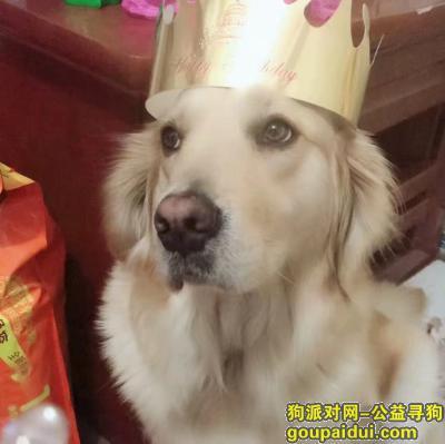秦皇岛寻狗网,重金寻狗 秦皇岛市海港区泰山路美岭小区走失金毛犬一只,它是一只非常可爱的宠物狗狗,希望它早日回家,不要变成流浪狗。