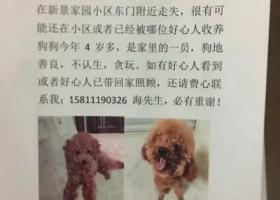 狗狗丢失北京东城区崇文门新景家园