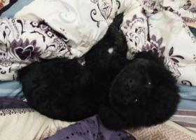 寻狗启示,钟楼区清潭路永红街道永红村委附近走失,它是一只非常可爱的宠物狗狗,希望它早日回家,不要变成流浪狗。