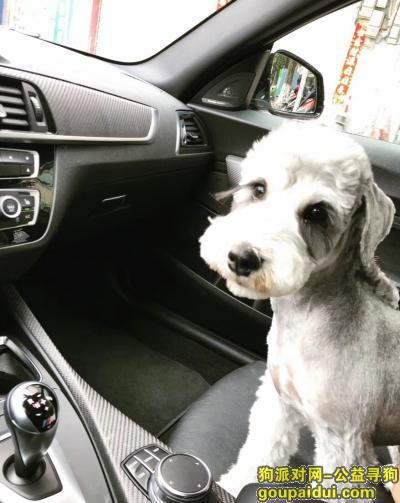 ,广东河源 寻狗 酬金2万,它是一只非常可爱的宠物狗狗,希望它早日回家,不要变成流浪狗。