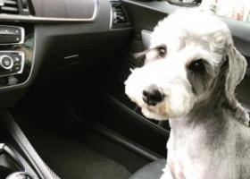 寻狗启示,广东河源 寻狗 酬金2万,它是一只非常可爱的宠物狗狗,希望它早日回家,不要变成流浪狗。