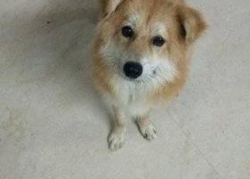 寻狗启示,请帮帮我寻找我的小小宝贝,它是一只非常可爱的宠物狗狗,希望它早日回家,不要变成流浪狗。