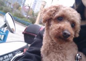 寻狗启示,福州台江区国货路小学附近寻找爱犬,它是一只非常可爱的宠物狗狗,希望它早日回家,不要变成流浪狗。