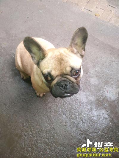永州寻狗网,请大家帮忙寻找爱犬,谢谢大家了,它是一只非常可爱的宠物狗狗,希望它早日回家,不要变成流浪狗。