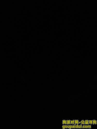 达州寻狗网,找到一只黑色的斗牛犬,它是一只非常可爱的宠物狗狗,希望它早日回家,不要变成流浪狗。