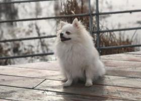 寻狗启示,寻狗启示 爱狗是家中的成员,请带走她的人把他送回来,重金感谢!,它是一只非常可爱的宠物狗狗,希望它早日回家,不要变成流浪狗。